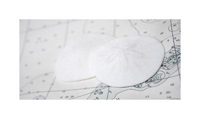 Nautical sand dollars-Savanah Plank-Giclee Print