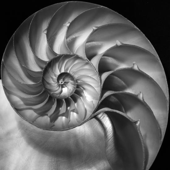 Nautilus 2-Moises Levy-Photographic Print