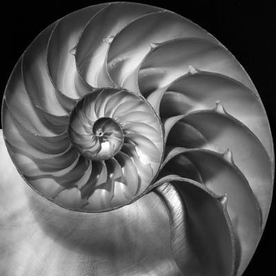 https://imgc.artprintimages.com/img/print/nautilus-2_u-l-q12uu7w0.jpg?p=0