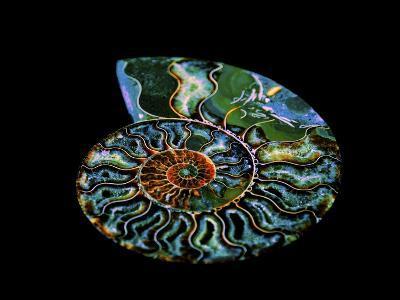 Nautilus I-LightBoxJournal-Giclee Print