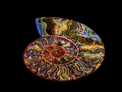 Nautilus III-LightBoxJournal-Giclee Print