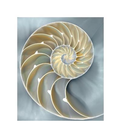 Nautilus in Blue I-Caroline Kelly-Giclee Print