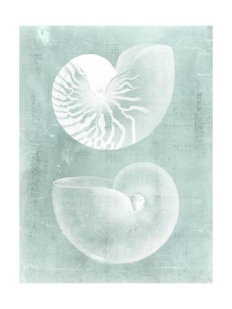 https://imgc.artprintimages.com/img/print/nautilus-on-spa-i_u-l-pyvqgu0.jpg?p=0