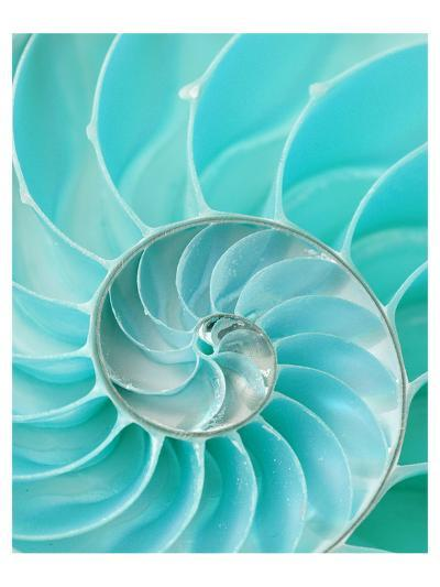 Nautilus Shell II--Art Print