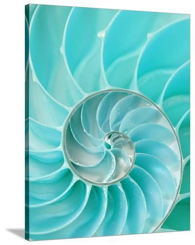 Nautilus Shell II--Stretched Canvas Print