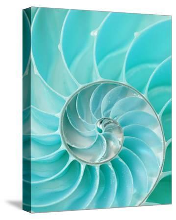 Nautilus Shell II
