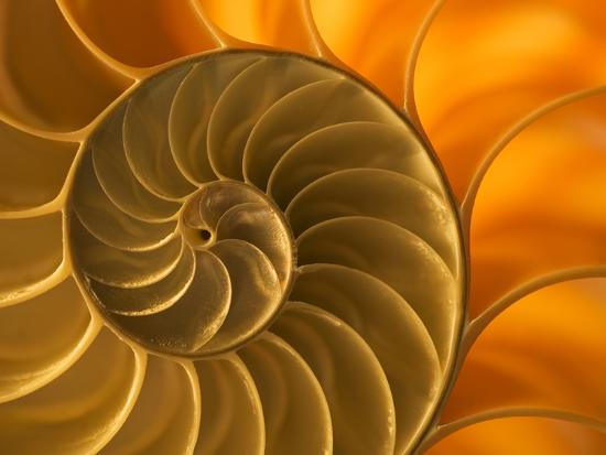 Nautilus Shell, South Pacific Ocean-Frans Lanting-Photographic Print
