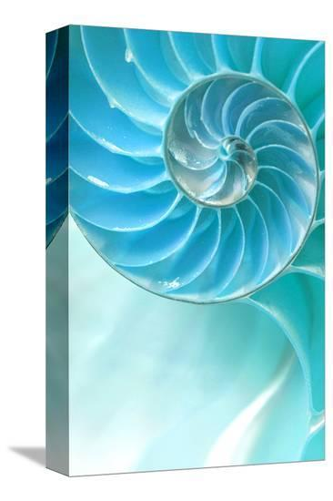 Nautilus Shell--Stretched Canvas Print