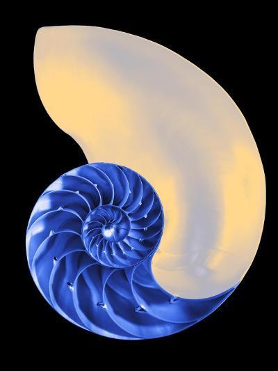 Nautilus Shell-Babar760-Art Print