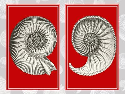 Nautilus Shells On Red-Fab Funky-Art Print