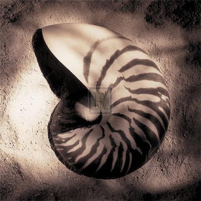 Nautilus-Laurel Wade-Art Print