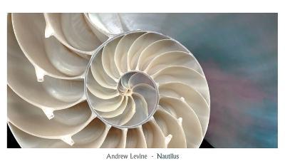 Nautilus-Andrew Levine-Art Print