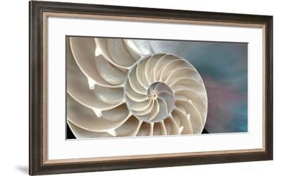Nautilus-Andrew Levine-Framed Art Print
