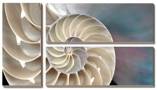 Nautilus-Andrew Levine-Canvas Art Set