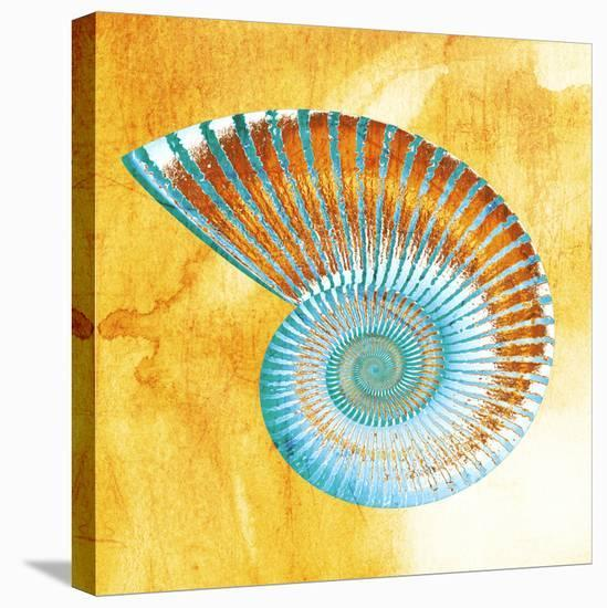 Nautilus--Stretched Canvas Print
