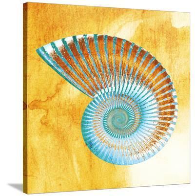 Nautilus--Stretched Canvas Print