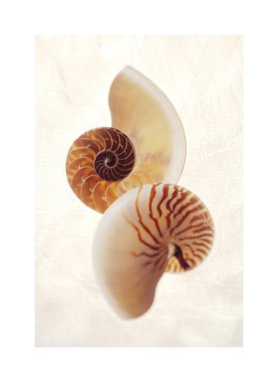 Nautilus-Glen and Gayle Wans-Giclee Print