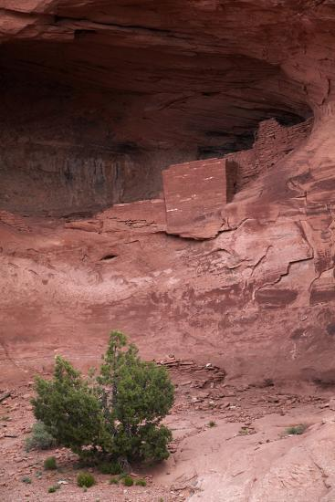 Navajo Nation, Monument Valley, Anasazi Cliff Dwelling, Mystery Valley-David Wall-Photographic Print
