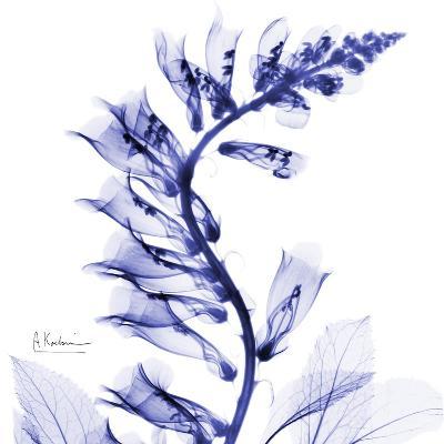 Navy Foxglove-Albert Koetsier-Premium Giclee Print