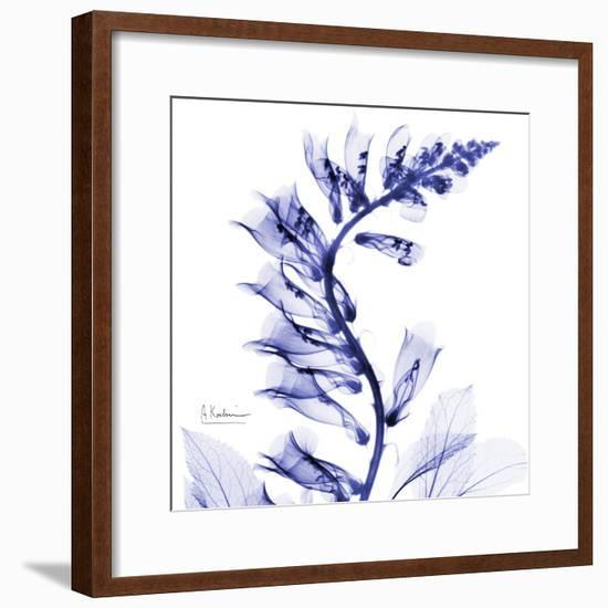Navy Foxglove-Albert Koetsier-Framed Premium Giclee Print