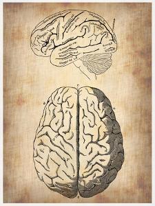 Vintage Brain Anatomy by NaxArt