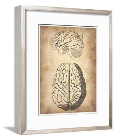 Vintage Brain Anatomy