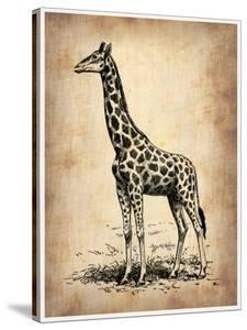 Vintage Giraffe by NaxArt