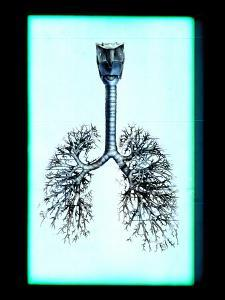 Human Lungs by Neal Grundy