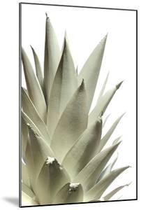 White Pineapple by Neal Grundy