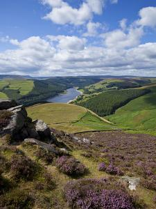 Derwent Edge, Ladybower Reservoir, and Purple Heather Moorland in Foreground, Peak District Nationa by Neale Clark