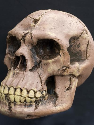 Neanderthal or Neandertal Man - Reconstructed Skull--Photographic Print