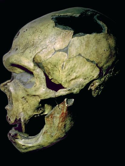 Neanderthal skull from France. Artist: Unknown-Unknown-Photographic Print