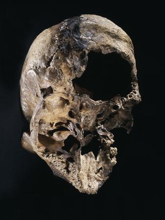 https://imgc.artprintimages.com/img/print/neanderthal-skull-from-guattari-cave-italy-c50-000-bc_u-l-q1fpa360.jpg?p=0