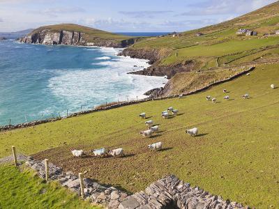 Near Slea Head, Dingle Peninsula, Ireland-Ken Welsh-Photographic Print
