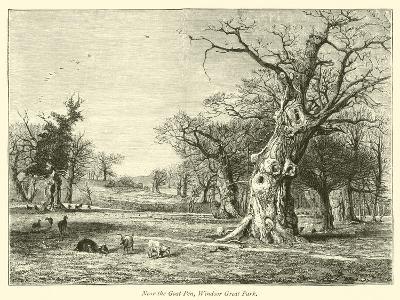 Near the Goat Pen, Windsor Great Park--Giclee Print