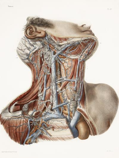 Neck Anatomy, 19th Century Artwork-Science Photo Library-Photographic Print