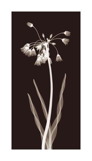 Nectar Twist-Jim Wehtje-Giclee Print