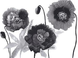 Poppies in Black and white by Neela Pushparaj