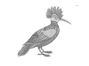 Bird Hoopoe by Neeti Goswami