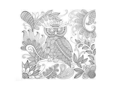 Owl 5