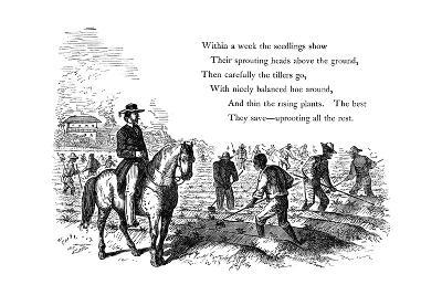 Negro Labourers Weeding Cotton under the Eyes of a Mounted White Overseer, Southern States of USA--Giclee Print