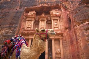 Camel in Front of the Treasury, Petra, Jordan, Middle East by Neil Farrin