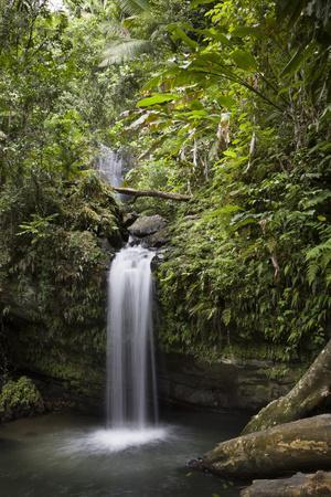 A Small Waterfall in El Yunque National Forest, Puerto Rico