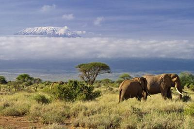 Mt. Kilimanjaro Viewed from Amboseli National Park, Kenya, Africa by Neil Thomas