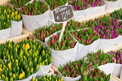 Tulip Flowers from Holland for Sale , Amsterdam Floral Market.