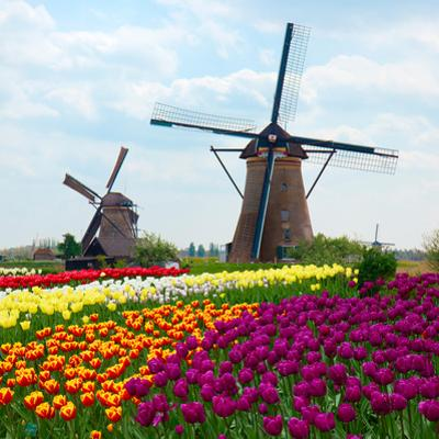Two Dutch Windmills over  Tulips Field by neirfy