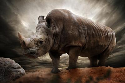 Huge Rhinoceros Against Stormy Sky by NejroN Photo