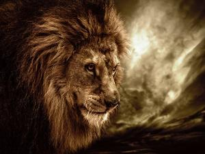 Lion Against Stormy Sky by NejroN Photo