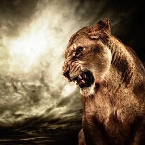 Roaring Lioness Against Stormy Sky by NejroN Photo