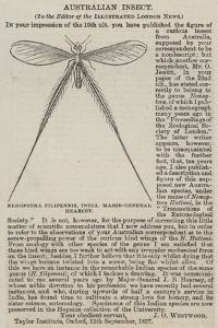 Nemoptera Filipennis, India, Major-General Hearsey